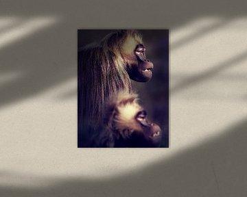 Des singes dans le noir