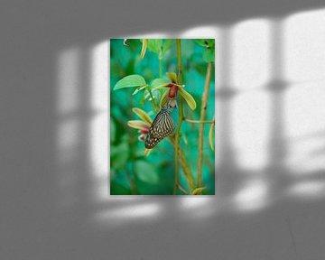 Schmetterling im Grünen von Homemade Photos