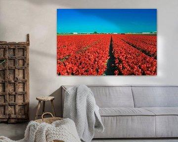 Rotes Tulpenfeld auf Niederländisch von Bart Verdijk