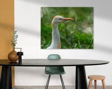 Kleine Koereiger - Bubulcus ibis van Rob Smit