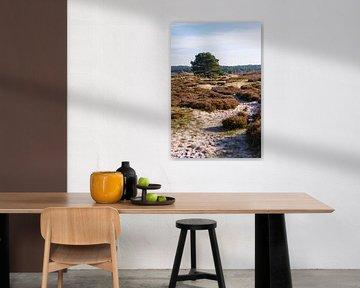 Herfst in de Schoorlse duinen van Rob Donders Beeldende kunst