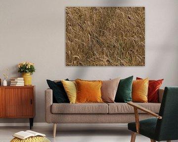 I Love Barley van Timon Schneider