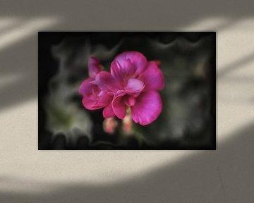 Blüte der Geranie von René Ouderling