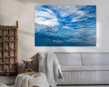Oiseaux dans le ciel sur Thomas Heitz