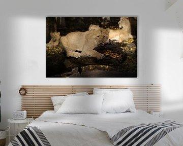The hungry lion von Ronald en Bart van Berkel