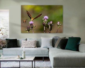 Schmetterling und Biene