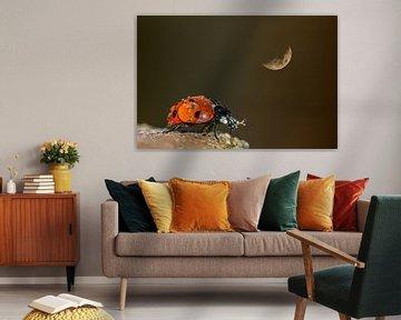 Der Mond und ich von Irene Lommers