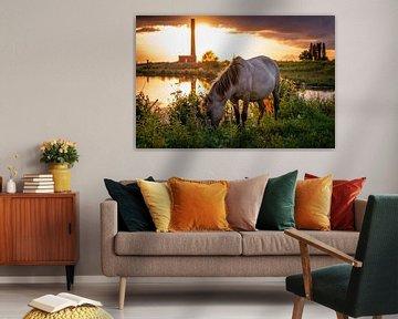 Konikpaard in de avondzon van Robin Pics (verliefd op Utrecht)