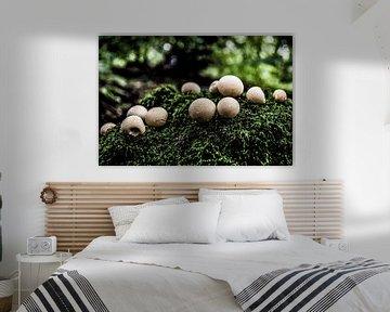 Veel kleine ronde champignons