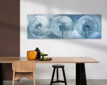 Drie paardenbloemen van Annette Schmucker