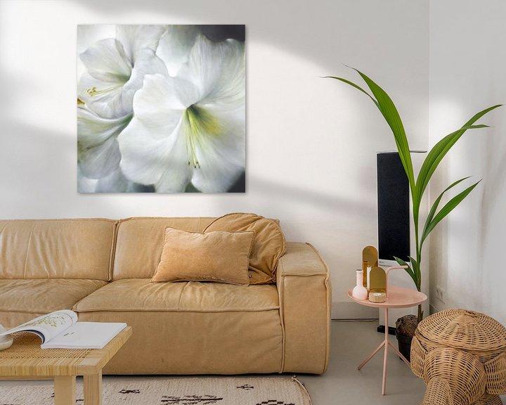 Beispiel: Weiße Amaryllis im Gegenlicht von Annette Schmucker