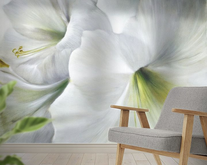 Beispiel fototapete: Weiße Amaryllis im Gegenlicht von Annette Schmucker