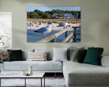 Ostsee - Möwen auf der Seebrücke Prerow von t.ART