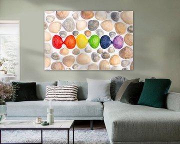 Muscheln in den Farben der Regenbogenflagge von Lisette Rijkers