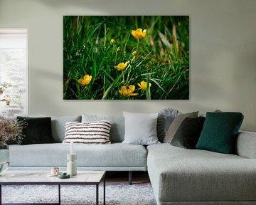 Butterblumen im Gras von Bart Verdijk