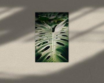 Sonnenstrahlen auf grünem Monstera-Blatt in den botanischen Gärten von Leiden   Fine Art Urbanjungle von Evelien Lodewijks