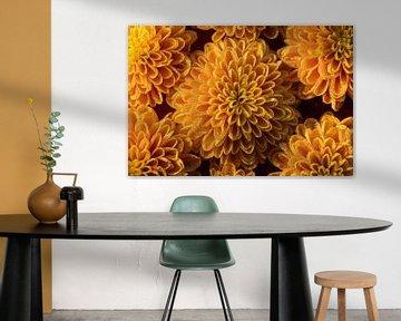 Gelb-orangefarbene Blüten mit Tropfen, die ein Muster bilden von Marjolijn van den Berg