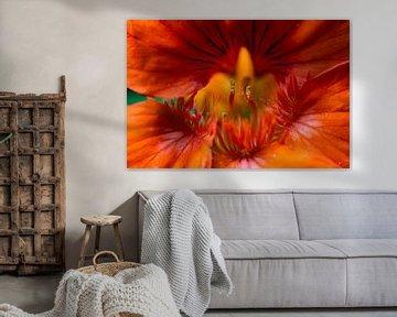 Orangefarbene Blume von Jorn Veen