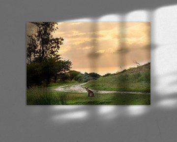 vos in avondlicht van Ed Klungers