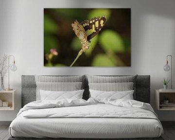 Siproeta Stelenes vlinder von Ronald en Bart van Berkel