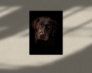 Labrador portet van Larissa Geuke