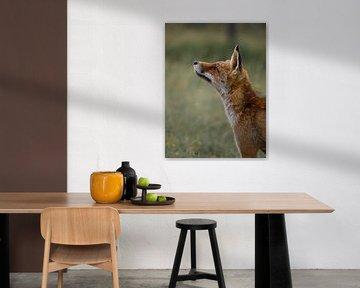 De nieuwsgierige vos van Larissa Geuke