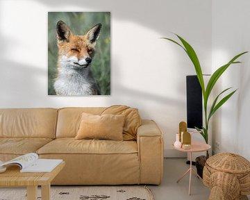 De prachtige vos van Larissa Geuke