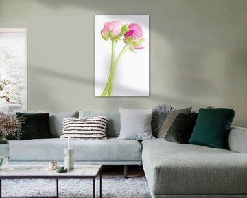 Roze ranonkels von Judith Borremans