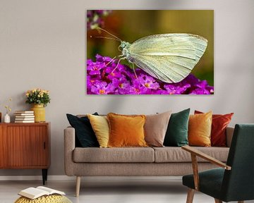 Magnifique papillon (blanc veiné) sur le buisson à papillons. sur GiPanini