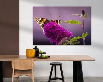 Schmetterling (Atalanta) auf dem Schmetterlingsstrauch. von GiPanini