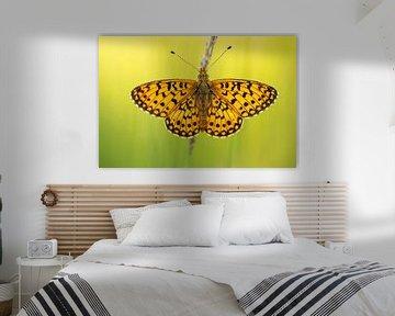 Zilveren maan vlinder van Erik Veltink