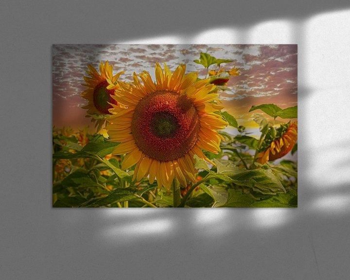 Sfeerimpressie: Zonnebloemen van Tonny Verhulst