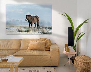 Exmoor pony met spreeuw in de winter van Maria-Maaike Dijkstra