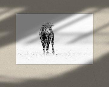 Jonge Taurus van Peter Ruijs