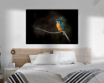 IJsvogel genietend van het leven van Peter Ruijs
