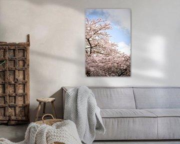 Bloemsemboom in de lente van Maria-Maaike Dijkstra