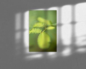 Hortus Botanicus | Botanische Gärten von Leiden | Blume | Pastell | Lensbaby fine Art Print von Gabry Zijlstra