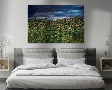 Zonnebloemen in de avond van Michael Nägele