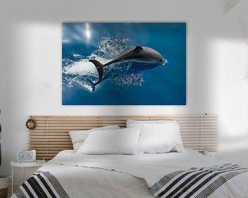Duikende Dolfijn van Bob de Bruin