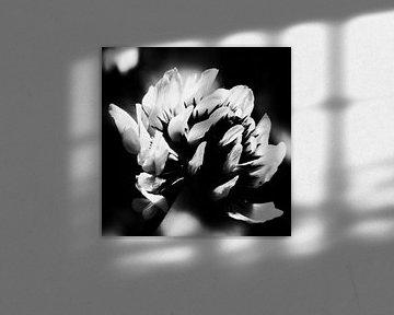 Kleine Blume mit schwarzer und weißer Mitte von Arendina Methorst