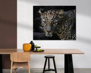 Een Javaanse luipaard in een wildpark van Anges van der Logt