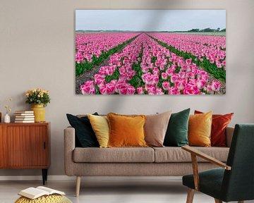 Gebiet der holländischen Tulpen von Alex Hiemstra