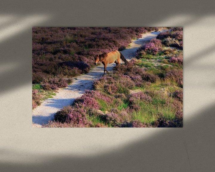 Sfeerimpressie: Paard op de bloeiende Posbank heide van Bobsphotography