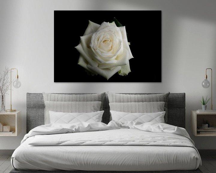 Sfeerimpressie: Witte roos op een zwarte achtergrond van Arjen Schippers