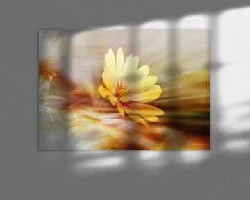 Blütentraum von Roswitha Lorz