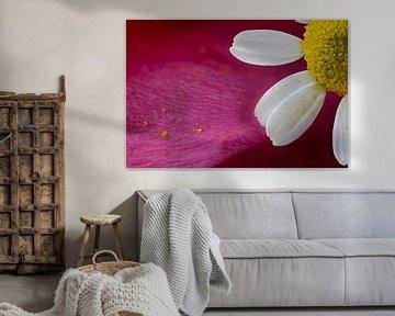 Macro van een bloem tegen abstracte achtergrond van Stefan Zwijsen
