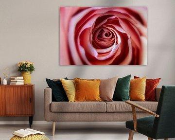 Abstracte roos macro van Stefan Zwijsen