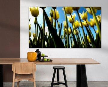 Tulipes néerlandaises sur Henk Miedema