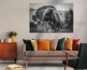 Schotse hooglander close-up zwart wit in de Nederlandse natuur van Maarten Oerlemans