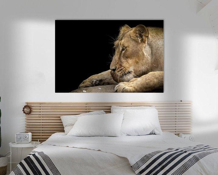 Sfeerimpressie: Leeuwin genietend van een stuk vlees van Karin aan de muur